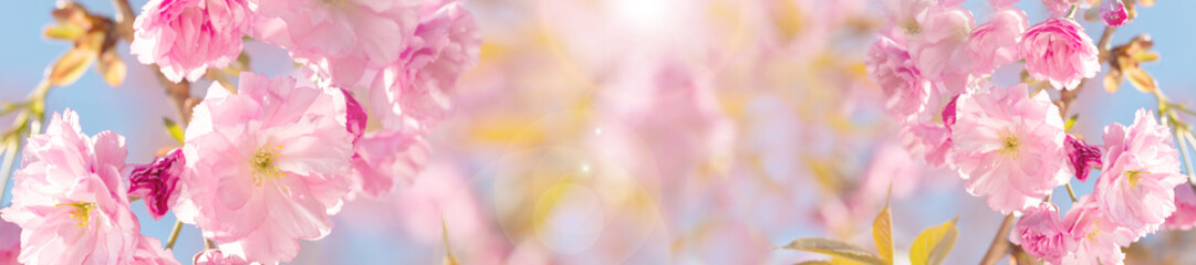banner springtime  background  with pink blossom