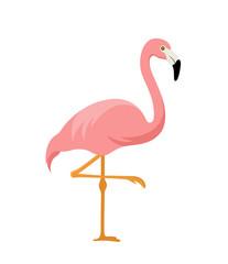 pink flamingo isolated on white background