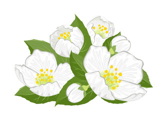 Banner with bouquet of jasmine flowers. White fragrant flowers and green leaves isolated on white background. Vector floral illustration in cartoon simple flat style.