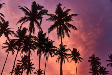 Tropical palms and the sky. Sri-Lanka. Amazing sunset and beautiful view.