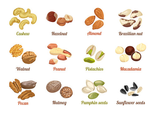 Set of named vector icons nuts and seeds. Cashew, hazelnut, almond, brazil nut, walnut, peanut, pistachios, macadamia, pecan, nutmeg, pumpkin seeds, sunflower seeds. Illustration in flat style.