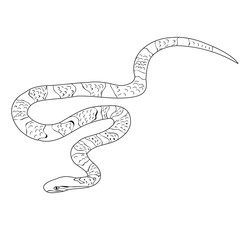 snake crawls, sketch isolated