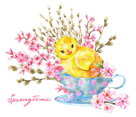 Funny chicken in old cup, blooming cherry tree flowers and willow branches. Watercolor spring illustration. Happy Easter! Design element for greeting card, invitation, isolated object on white backgro