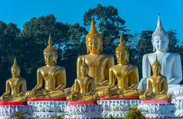 a lot of Buddha statues in the large field at  Tungsong Nakornsrithammarat