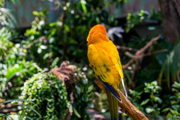 colorfull parrot sitting on a tree branch in indoor tropical garden