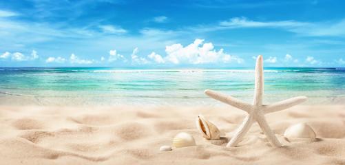 Seashells on Seashore Close Up Beach Holiday Background