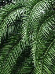 palm leaf tree in park
