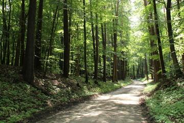 Wall Murals Road in forest Waldweg im Frühling