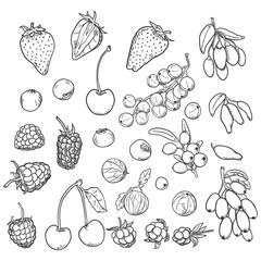 Vector Sketch Set of Berries