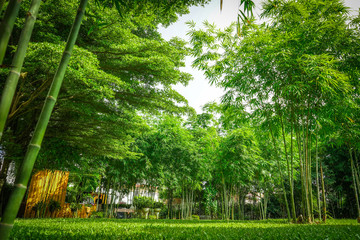 a lot of bamboo tree in the private graden with a little wooden cottage beside.