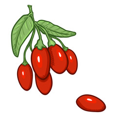 Vector Cartoon Goji Berries on Branch
