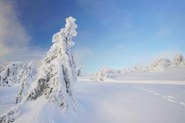 auf dem Berggipfel im Winter