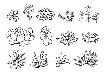 Succulent plants set. Vector hand drawn outline sketch illustration
