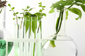 Fototapete - Laboratory glassware with plants on white background. Chemistry concept
