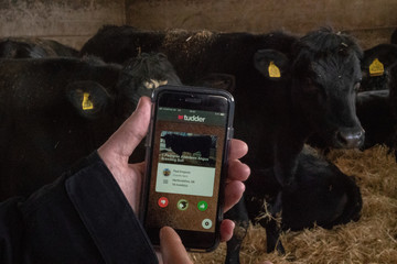 Tinder-inspired app called Tudder is demonstrated at a farm in Hampshire