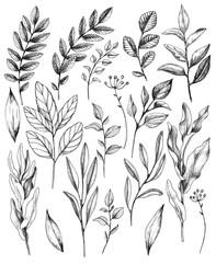 Hand Drawn Leaves of Wild Plants Set