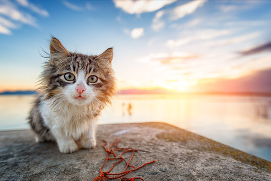 Long-haired puppy cat look curiously, colorful sunset on background.