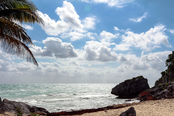 beautiful sea in clear weather. beach with sand and palm trees. palm trees side view close-up, ocean in the background. beach with sand and stones. clouds over clear transparent blue sea