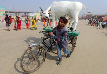 """A man transports a replica of cow on the banks of the river Ganges during the ongoing """"Kumbh Mela"""" in Prayagraj"""