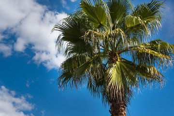 Green palm tree against a blue sky background