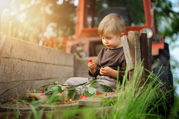 The boy eats cherries in the countryside