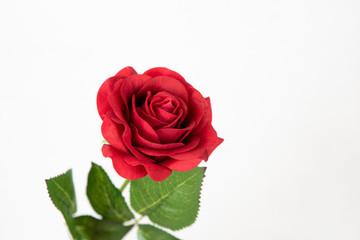Rose rouge seule sur fond blanc