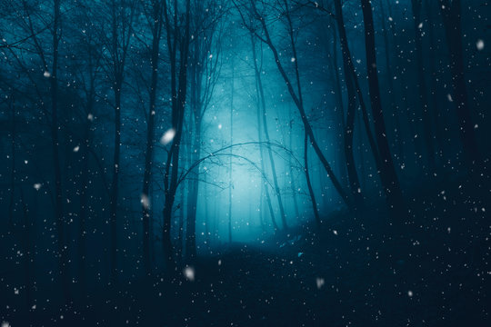 Mystical dark blue foggy forest with snowflakes.