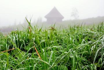 rosa na trawie, górska chata