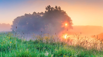 Spring morning in meadow