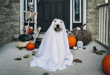 Dog wearing costume sitting near closed door during Halloween Fototapete