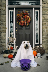 Dog wearing costume sitting near closed door during Halloween