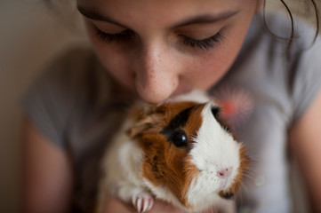 Close-up of girl kissing guinea pig at home