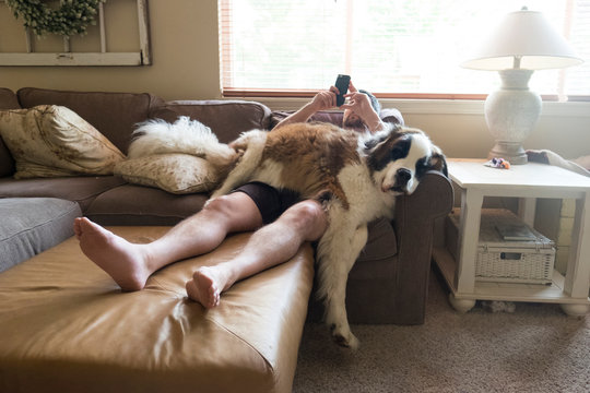 Full length of man using mobile phone while lying with Saint Bernard on couch at home