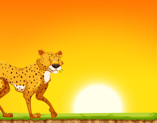 A cheetah at the sunset scene