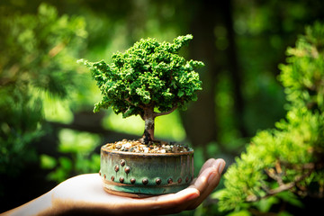 Foto op Plexiglas Bonsai Sekka Hinoki bonsai in Hand