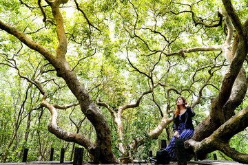 Beautiful woman sitting on big tree branch in the middle of the pathway at Golden Mangrove Field (Tung Prong Thong) ,Pra Sae, Rayong, Thailand.