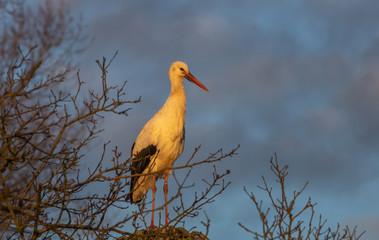 Stork Bird Winter Europe