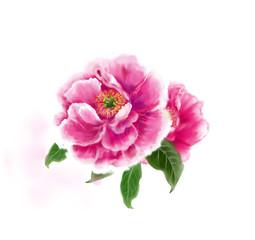 모란꽃 그림