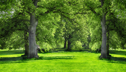 Trees and green grass in the city park