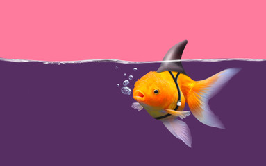 Goldfish with shark fin swim in violet water and pink sky, Gold fish with shark flip, Goldfish breathe with bubbles in the water, Gold fish wants to be a shark. Mixed media