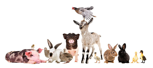 Group of funny farm animals isolated on white background Wall mural