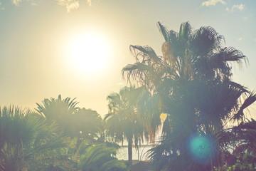 palm tree on the beach