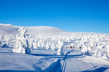 Winterland - Trysil Norway