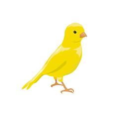 small yellow bird. canary