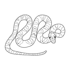 isolated, snake sketch