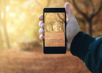 Hand man holding a smart phone to take pictures in the forest during the autumn season