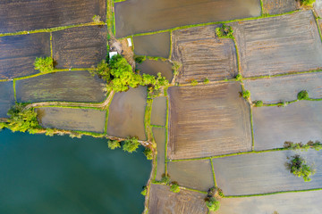 Aerial view of agriculture in rice fields to prepare planting. Abstract landscape