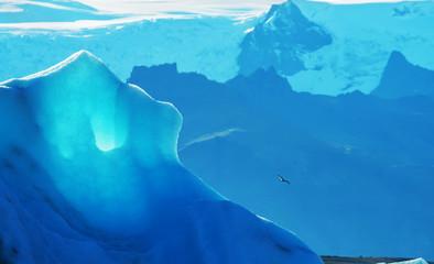A huge glacier and a bird hovering above it. Iceland. melting glacier.