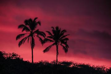 Pink Sunset palms