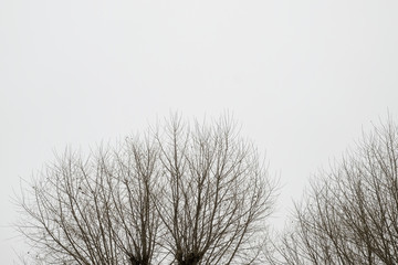 trees branches covered by the snow, minimalist picture.